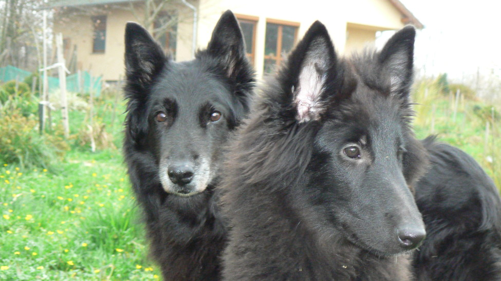 Tinyó és Dorci
