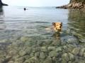 Ardi úszik