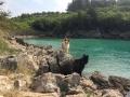 kutyás strand felé