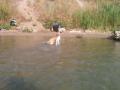 cicakutya a vízben