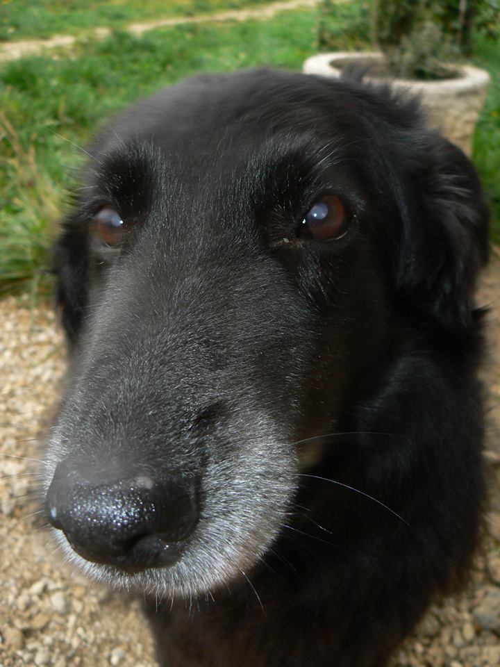 Zala, '08