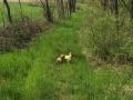 kiskutya a határon