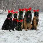 Rudolph és társai…