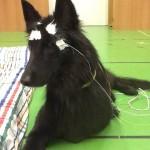 Állatkísérletek