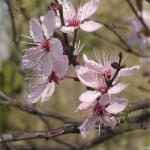 OFF: a tavasz tizenhét illata