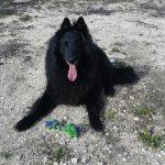 Nagytestű kutyával egy lakóparkban