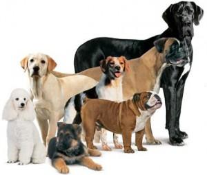 dogfact2