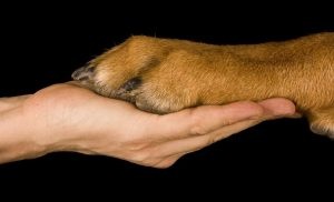 dog-paw-and-guardians-hand