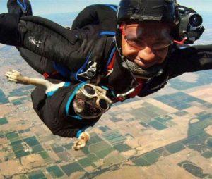 sky-diving-pug-e1313778106938